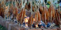 U Lužanima održane 12. Orljavske ribarske večeri